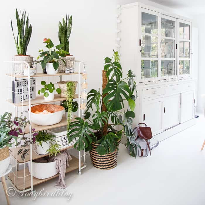 white living indoor plants urban jungle trolley bakkerskast kamerplanten