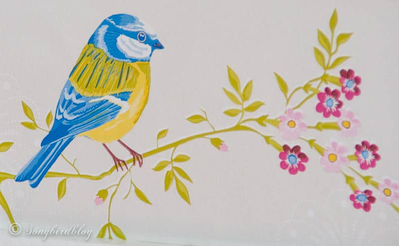 wallpaper detail of blue tit bird