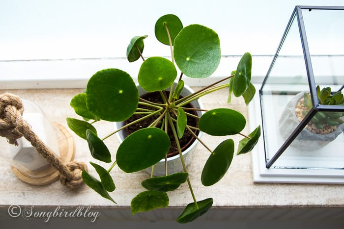 Overhead plant view on window sill