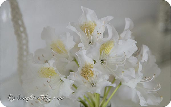 white flowers via Songbirdblog